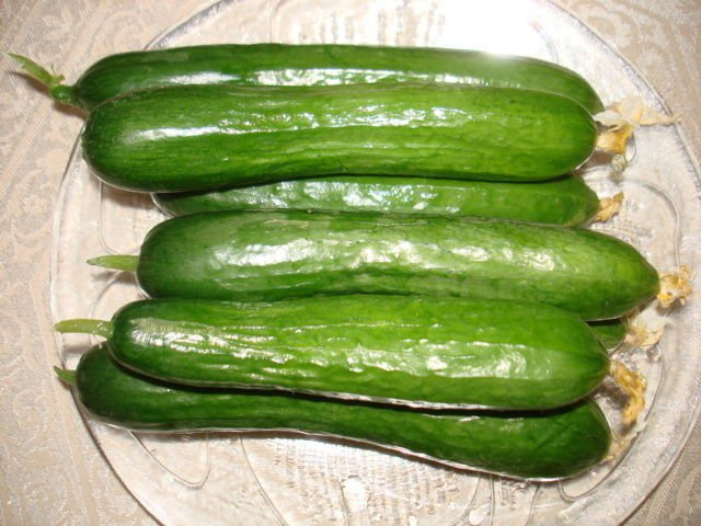 Organic Persian Cucumber seeds(30)guarantee growتخ� بذر خ�ار ا�را��