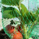 3 STRAWBERRY PLANT  Organic- Yields lots of tasty and healthy red strawberries