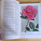 ROSES Bobbink & Atkins 1929 Antique Catalog American Grown