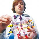 Brainstring Advanced 3-D Puzzle toy gift prize kids game FREE SHIPPING IN THE USA