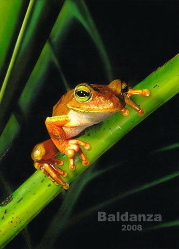 """A beautiful frog"" - original acrylic painting"