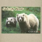 GRIZZLY BEAR AND CUB CANADA POSTCARD