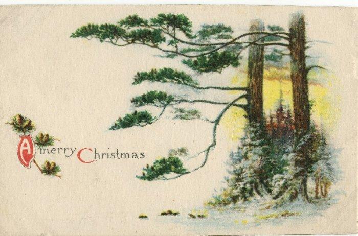 1916 Vintage Christmas Postcard Winsch back Pine Tree