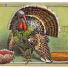 Vintage Thanksgiving Postcard turkey Pumpkin Pie Cranberry 1907