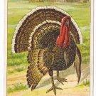 1908 Julius Bien Turkey Farm 9202 Vintage Embossed Thanksgiving Postcard