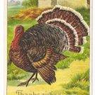 1908 Julius Bien Big Tom Turkey 9204 Vintage Embossed Thanksgiving Postcard