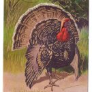 Large Tom Turkey Vintage 1908 Thanksgiving Greetings Postcard Gold Accents Embossed