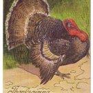 Vintage Thanksgiving Postcard Tom Turkey Moire