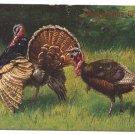 Schonian Turkeys Vintage Thanksgiving UND Postcard GAN