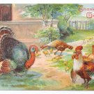 Turkeys with Rooster Vintage Thanksgiving Postcard