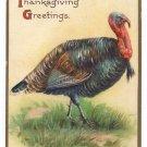 Turkey Embossed IAP Vintage Thanksgiving Postcard ca 1908