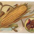 Wishbone Ear of Corn Turkey Vintage Thanksgiving Postcard 1909