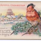 Bird Robin Vintage Christmas Postcard