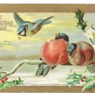 Winter Birds Holly Branch Blue Jay Gold Gilt Vintage Christmas Postcard