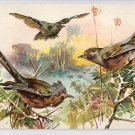 Fleischmann's Yeast Trade Card Chromo Advert Birds Premium