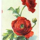 Embosssed Roses 1908 Vintage Birthday Postcard
