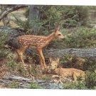 Fawns Baby Deer Greetings Pocono Mts Postcard