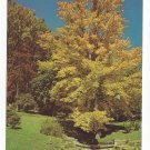 DuPont Winterthur Museum Gardens DE Autumn Foliage Quarry and Lower Ponds Continental Postcard