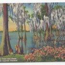 Florida Cypress Gardens Trees and Knees FL Vintage Linen Postcard