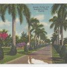 Florida Stately Palms Australian Pines FL Vintage Linen Postcard