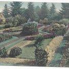 OR Portland Sunken Garden Park Ave Vintage 1908 Postcard