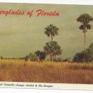 FL Everglades Sawgrass Palmetto Trees Vintage Postcard