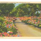 CA San Francisco Golden Gate Park Path of Rhododendrons Vtg Postcard