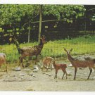 Sika Deer National Zoo Washington DC Vtg Postcard