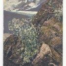 Flowers Alpenflora Artemisia Erzh Otto-Haus Huttenstempel Vintage Postcard