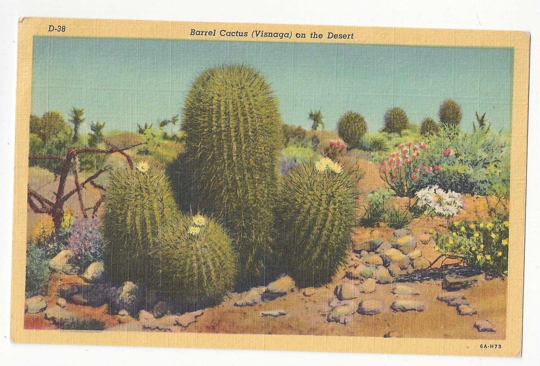 AZ Barrel Cactus Desert Flower Vintage Postcard Linen Arizona