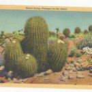 AZ Barrel Cactus Desert Flower Vintage Postcard Linen Arizona