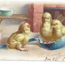 Easter Postcard Chicks in Ladle Vintage Tuck Embossed UDB ca 1905 Postcard