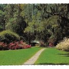 Southern Garden Azaleas Spanish Moss CH Ruth Photo Vtg Postcard 4X6