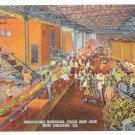 Unloading Bananas Ship Side New Orleans Vintage Postcard