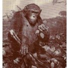 African Chimpanzee American Museum of Natural History Postcard