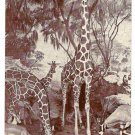 African Giraffe Gazelle Exhibit American Museum of Natural History Postcard