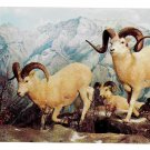 White Sheep Exhibit Philadelphia Academy of Natural Sciences Postcard
