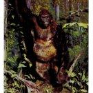 Lowland Gorilla Exhibit Philadelphia Academy of Natural Sciences Postcard