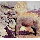 Philadelphia Zoological Gardens Elephant Zoo Postcard