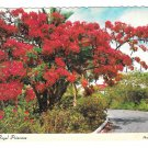 Hawaii Royal Poinciana Flower Vintage Postcard 4X6
