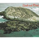 California Monterey Seal Rock Birds Sea Lions 17 mile Drive Postcard