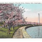Washington DC Cherry Blossooms Potomac Park Riverside Drive Vintage Postcard