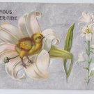 Easter Postcard Chick in Lily Embossed Silver Moire Vintage 1909