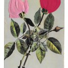 Greetings Two Applied Silk Roses Vintage Novelty Postcard