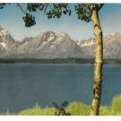 Grand Teton National Park Lake Jackson Vintage Postcard Muench Photo