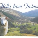 Hello from Ireland Sheep John Hinde 4X6 Postcard O'Driscoll Photo