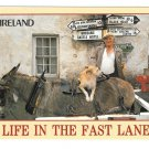 Ireland Life in the Fast Lane Mule Dog Signpost John Hinde 4X6 Postcard Nagele Photo
