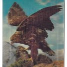 3D Lenticular Hawk Bird of Prey Raptor Souvenir of Atlantic City NJ Postcard