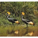 East African Wildlife Crown Birds Vintage Postcard 4X6