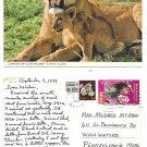 Africa Kenya to US East African Airline Label on John Hinde Lionness Postcard 1979